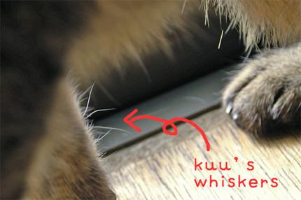 S_kuuswhiskers