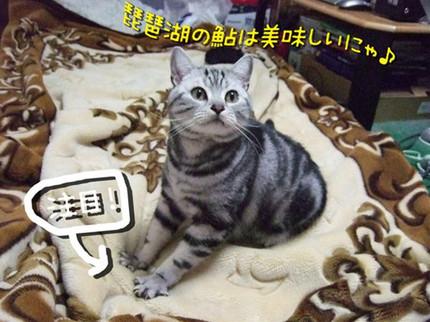 Fumifumitamachan_r