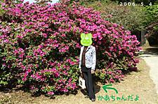 H180504tutuji_r