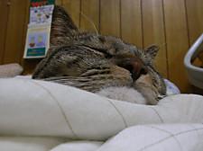 Sleep_kuu