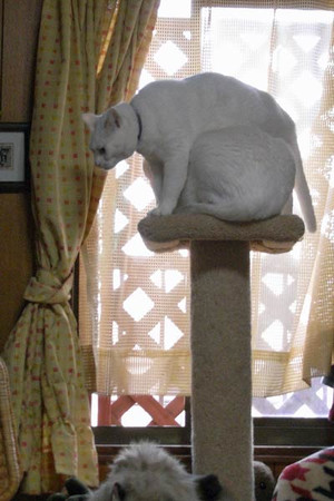 Cattower2