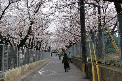 Sakuratunnel1203231