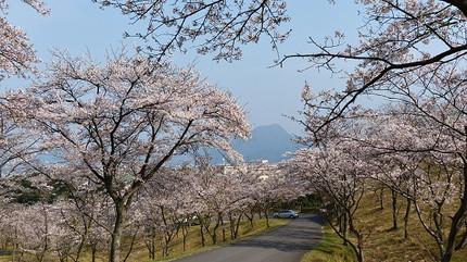 Ougiyama130330f