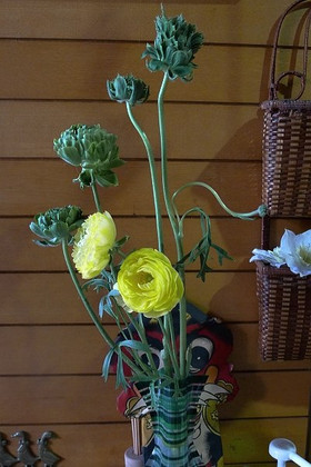 Ranunculus01
