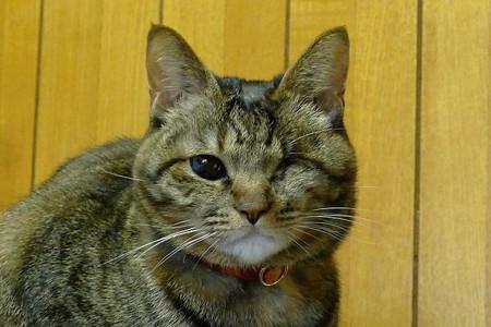 Yokunarimashita