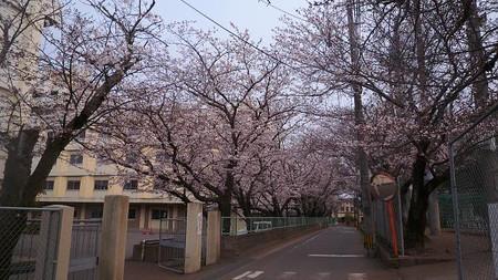 Sakura110402b