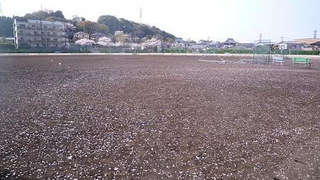 Sakuranocarpet110409