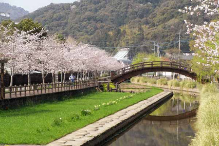 Sakura_saiki1
