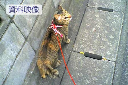 Shiryoueizou