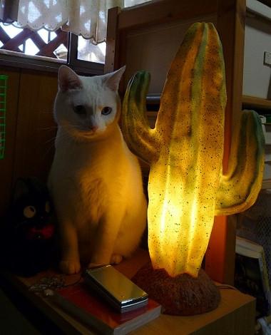 Saboten_lamp